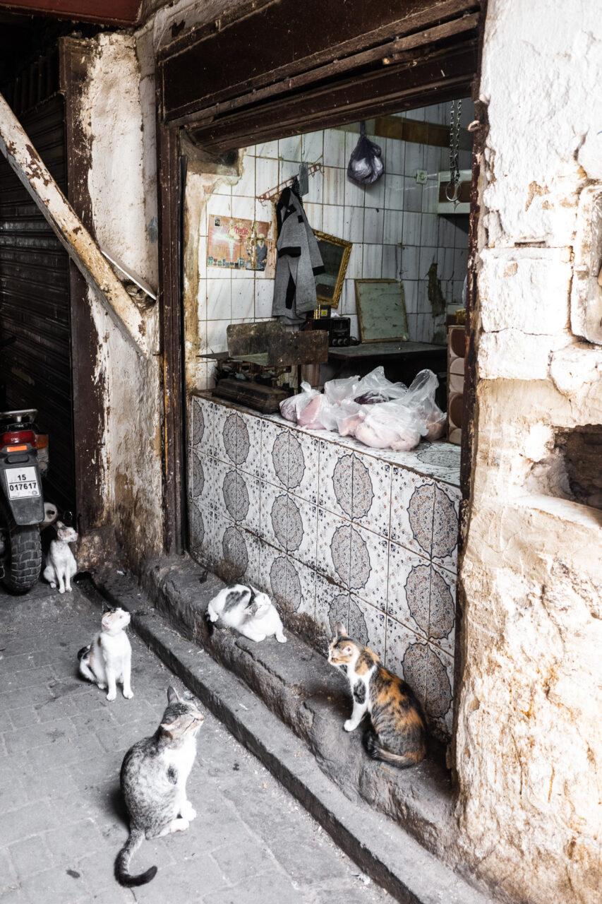 Fleischer in Marokko